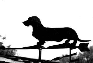 Dachshund Wire-haired weather vane