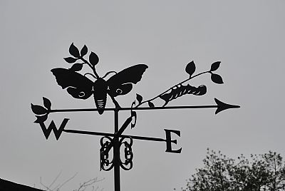 Hawk Moth weather vane